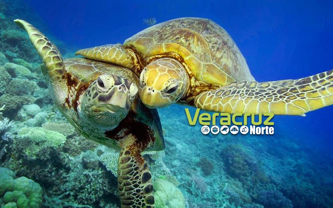 23 de mayo: Día internacional de la Tortuga