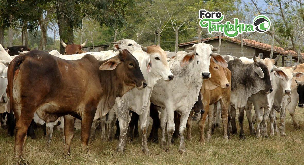 Productores no aseguran ganado ni predios
