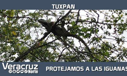 Protejamos a las Iguanas
