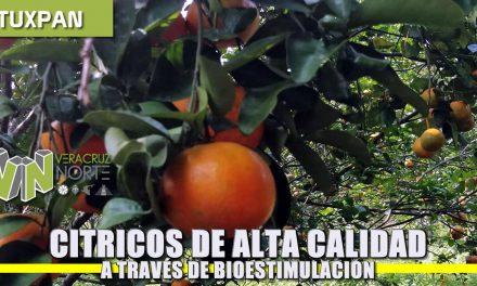 Cítricos de alta calidad a través de Biostimulación