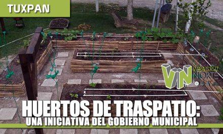 HUERTOS DE TRASPATIO: UNA INICIATIVA DEL GOBIERNO MUNICIPAL